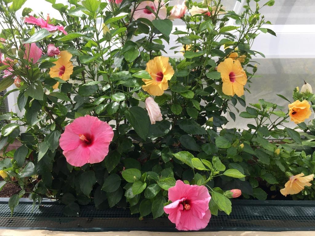 blenheimtropicalflowers
