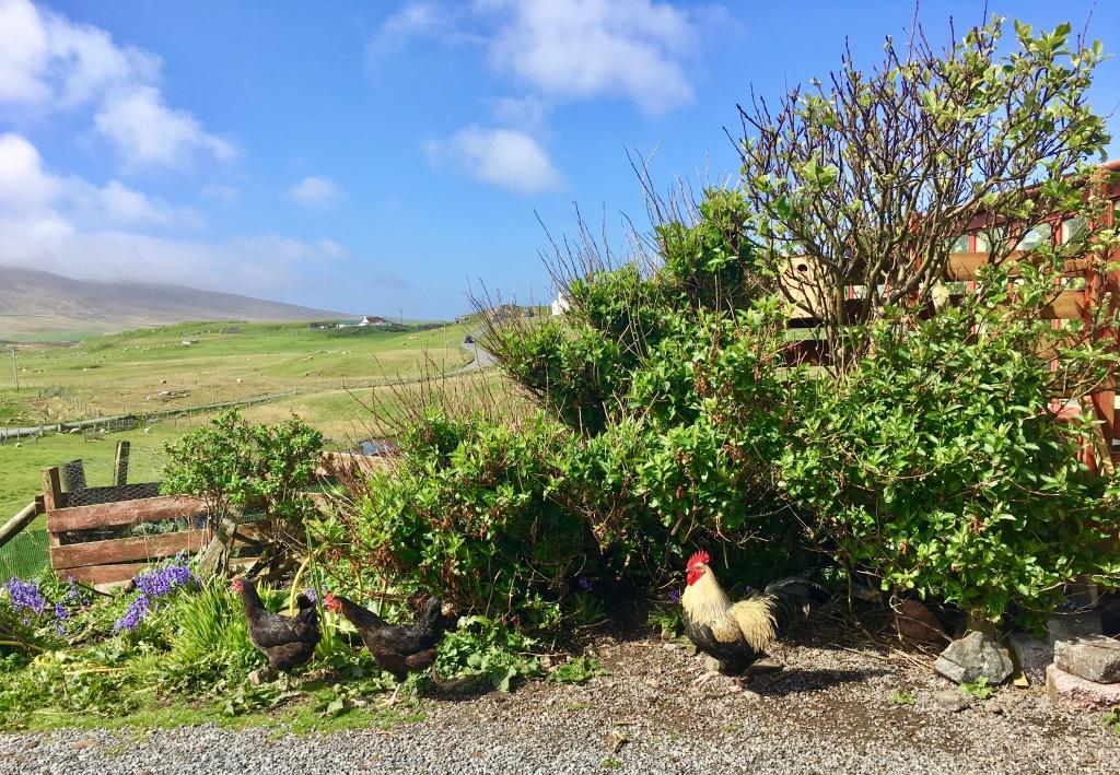 Shetland_4