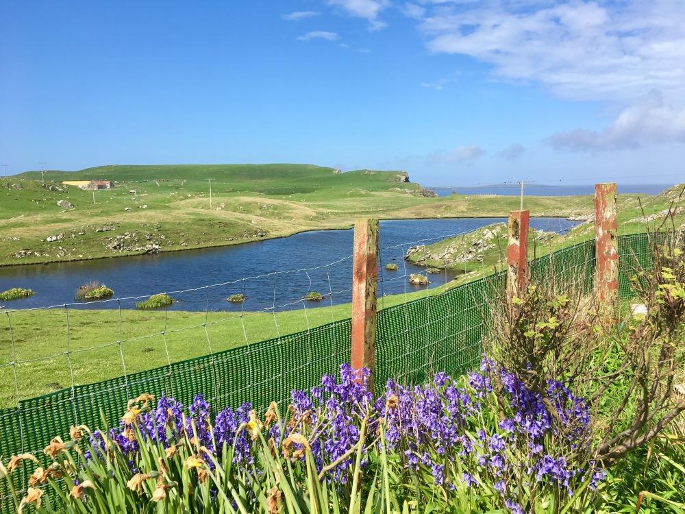 Shetland_6
