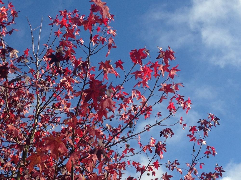 AutumnLondon