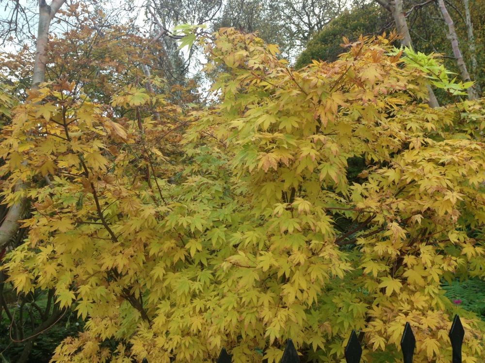 AutumnLondon1