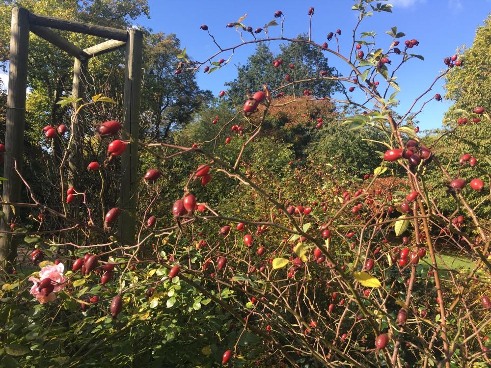 AutumnLondon11