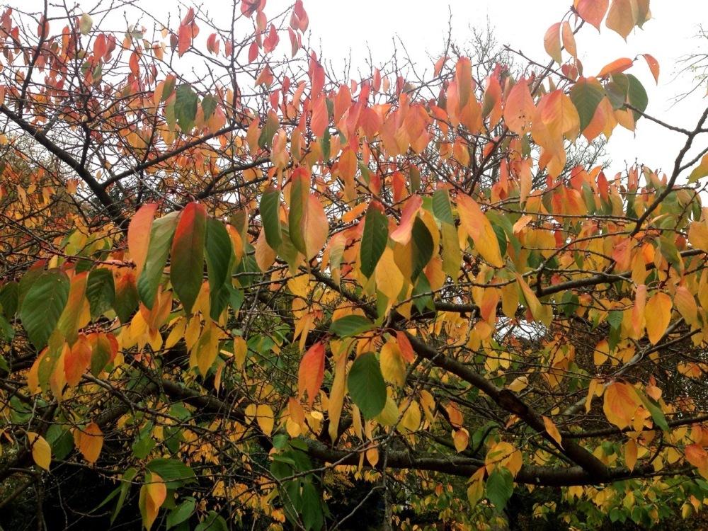 AutumnLondon2