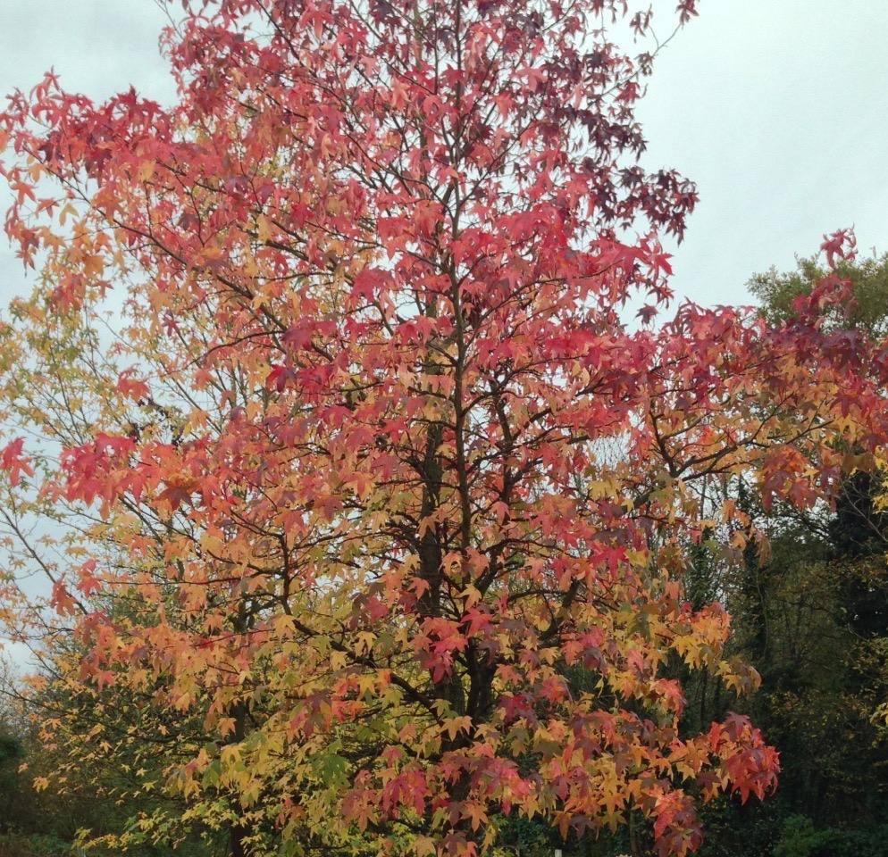 AutumnLondon3
