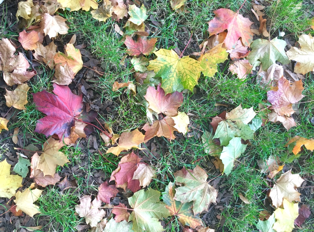 AutumnLondonPark11