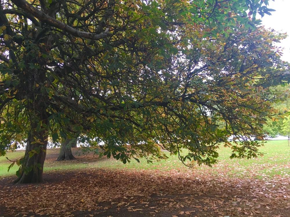AutumnLondonPark6