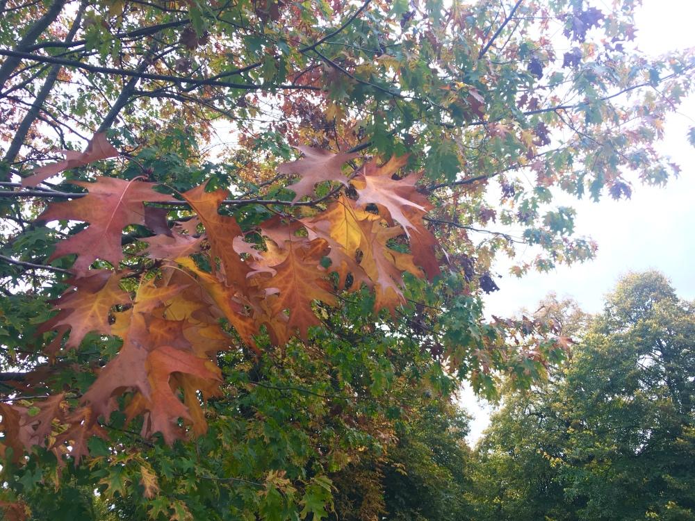 AutumnLondonPark7
