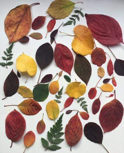 DecemberMusings_AutumnLeaves