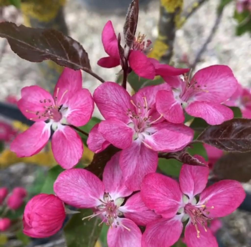 Spring18-elsphotos19